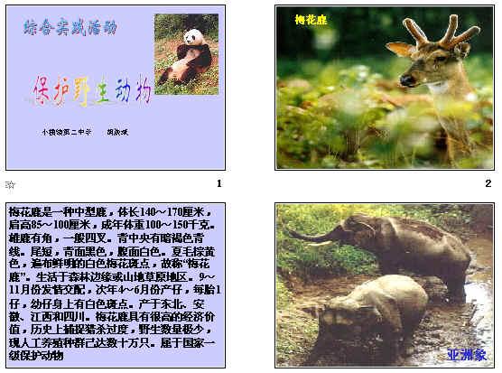 :保护野生动物ppt