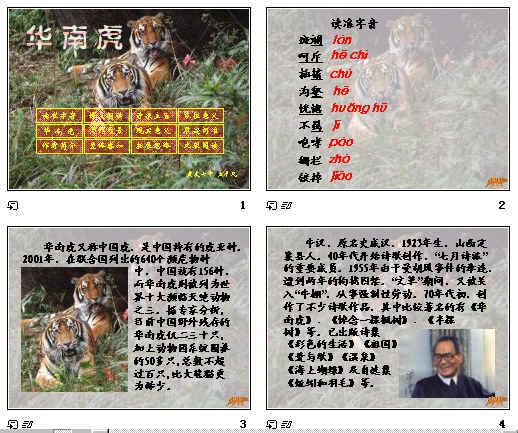 华南虎ppt28