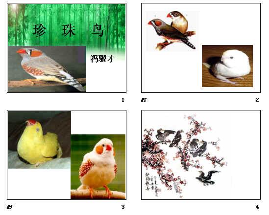 《珍珠鸟》ppt89