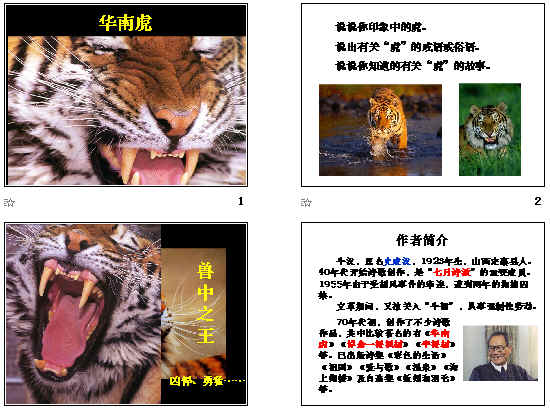 华南虎ppt38 人教版