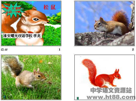 """(由总到分的层次结构)  (2)作者为什么说""""松鼠是""""讨人喜欢""""的一种小"""