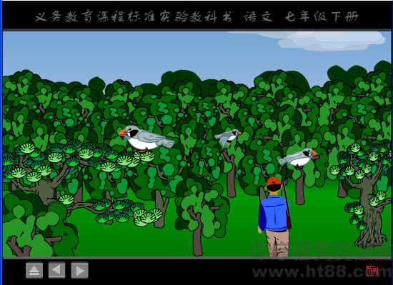 《珍珠鸟》flash视频素材1