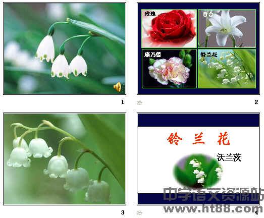 《铃兰花》ppt8