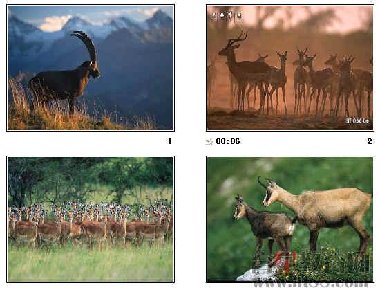 斑羚简笔画步骤图