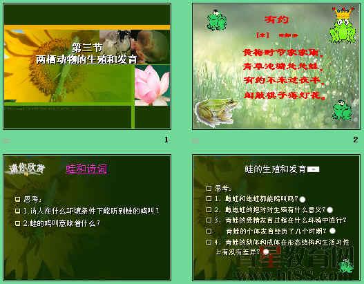 《两栖动物的生殖和发育》ppt21