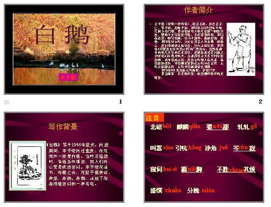 《白鹅》教学设计1 语文版 《白鹅》课堂实录2 语文版 《白鹅》ppt19