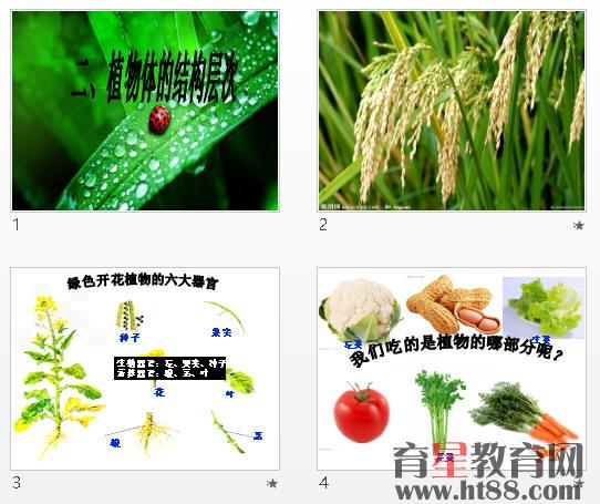 多细胞植物的结构层次