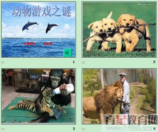 动物游戏之谜ppt64 人教课标版