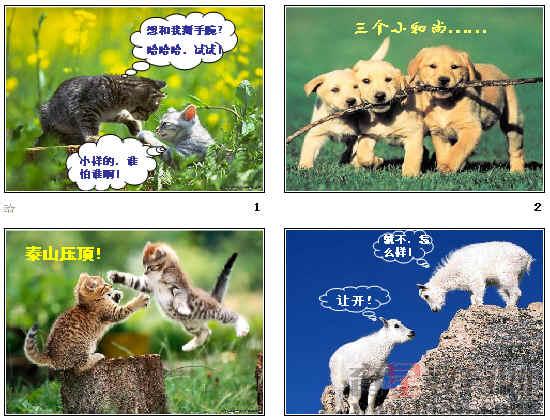 动物游戏之谜ppt67 人教课标版
