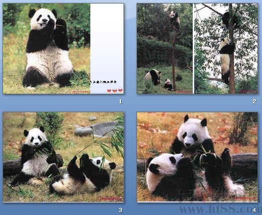 《国宝——大熊猫》,来系统地认识这种可爱的动物