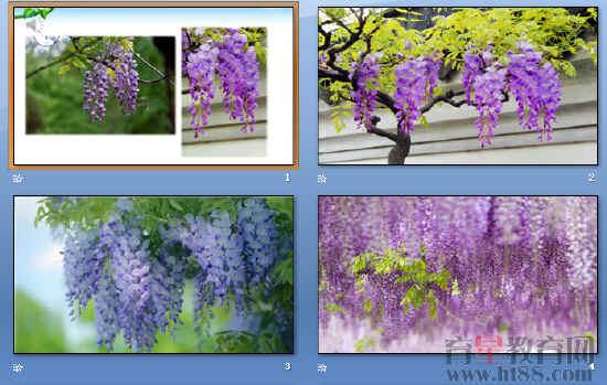 《紫藤萝瀑布》ppt201