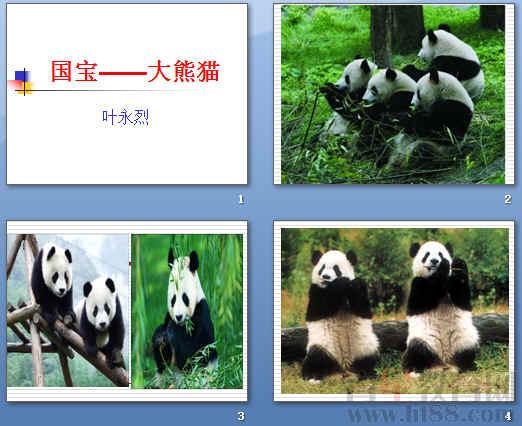 "c.在各地的动物园里,大熊猫成了最受宠爱的""贵宾.""     d."