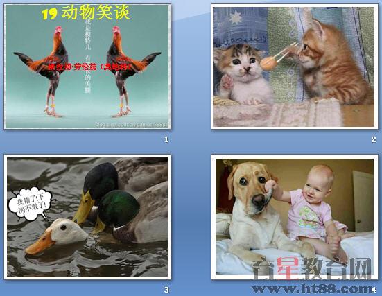动物合作做事的图片