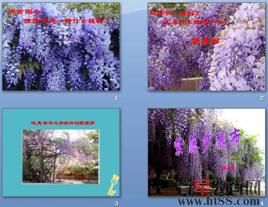 《紫藤萝瀑布》ppt215(打包4套)