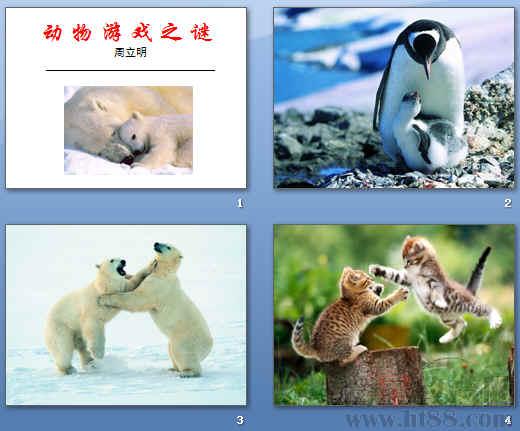 《动物游戏之谜》ppt78